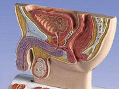 031-urologia